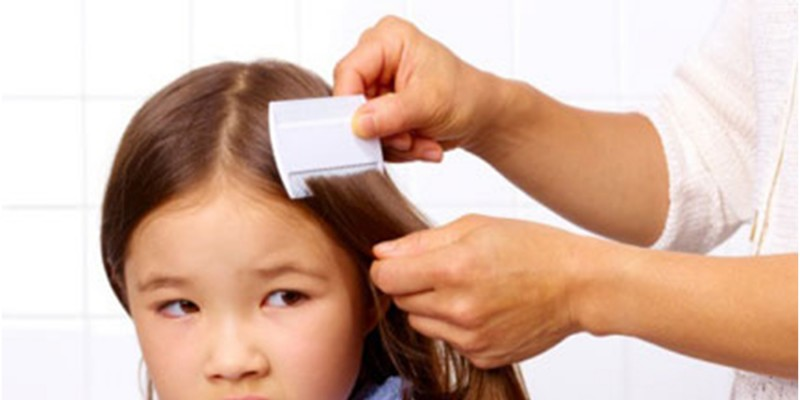 Lice Removal Company – Primary Symptoms and Complications Due to Lice