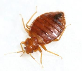 Bed Bug Exterminator Keeps Bed Bugs Away From Your Home