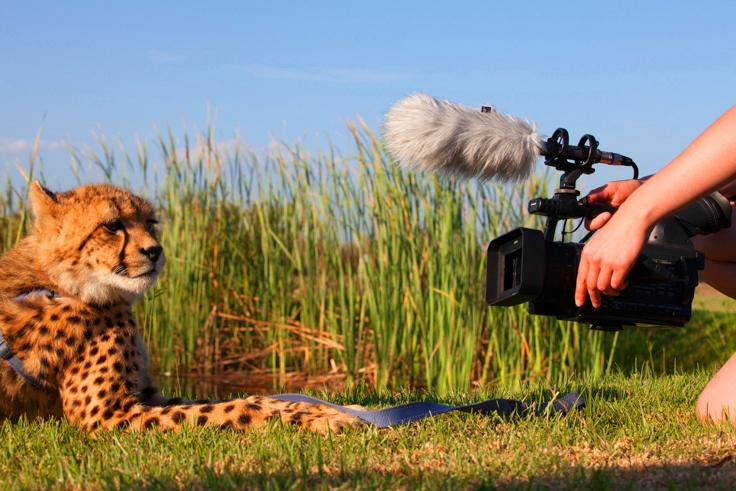 Top Qualities of a Wildlife Film Maker