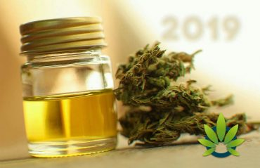 What are the few best companies in CBD you can go for?