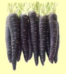 Learn the Benefits of Black Carrots Extract